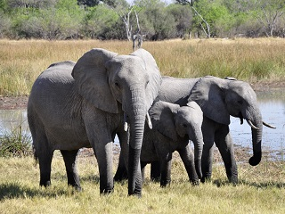 Cape Town to Kruger Tour
