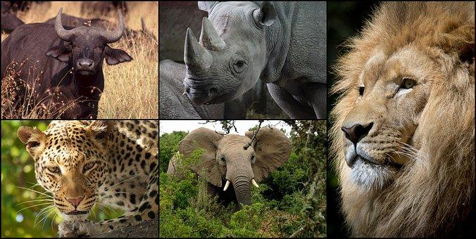 Pilanesburg National Park – Safari Camp